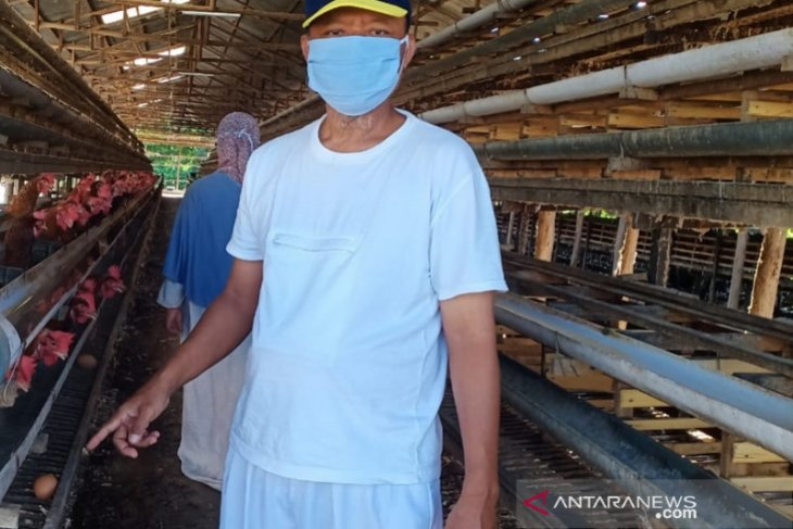 Peternak ayam Kalsel mulai bangkit di tengah pandemi COVID-19