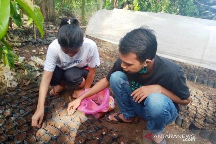 Tingkatkan sikap kreatif, mahasiswi Polbangtan Medan turut membibit kakao