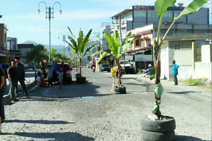 Tanah masih luas, tapi warga tanam pisang di jalan, ada apa ya?