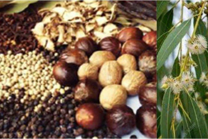 Puluhan ribu tanaman di Indonesia belum tereksplorasi jadi obat
