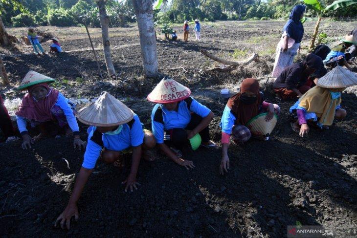 Padat Karya Tunai Desa akan serap 7,05 juta tenaga kerja