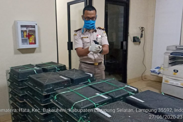 Petugas Karantina Pertanian Lampung gagalkan penyelundupan 1.673 burung