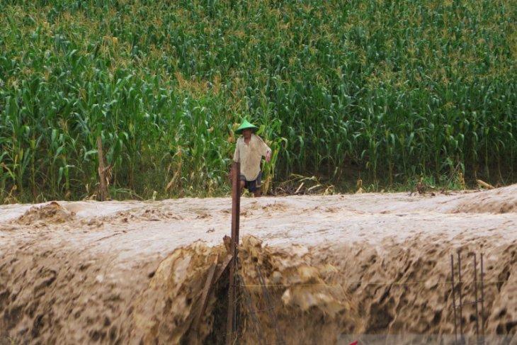 Pemprov Gorontalo ganti kerugian benih jagung petani di Bone Bolango