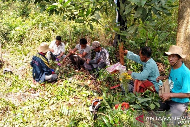 Sosok Misngadi edukasi warga tentang karhutla melalui  budi daya nanas