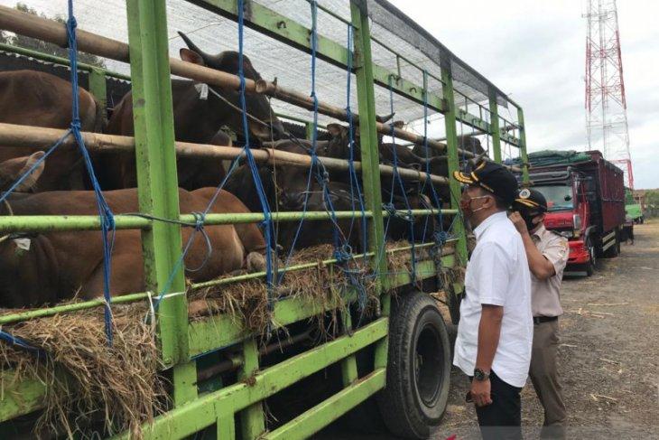 Balai Karantina Denpasar pastikan pengiriman sapi bali ikut prosedur