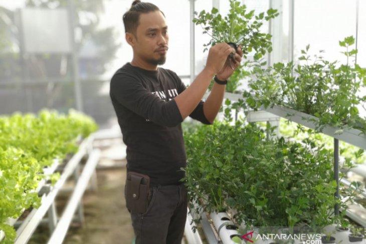 Omzet usaha pertanian hidroponik meningkat di saat pandemi