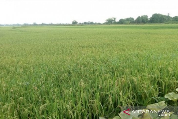 Kuota pupuk bersubsidi untuk Kabupaten Penajam dipangkas ribuan ton