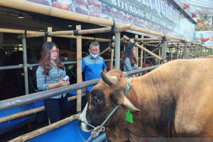 Mall Hewan Kurban Haji Doni di Depok jamin kesehatan setiap sapinya (Video)
