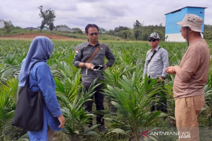 Realisasi peremajaan sawit di Kalbar capai 2.500 hektare