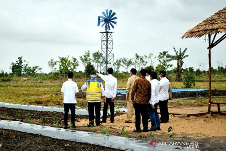 Other regions can emulate C Kalimantan food estate development: Jokowi