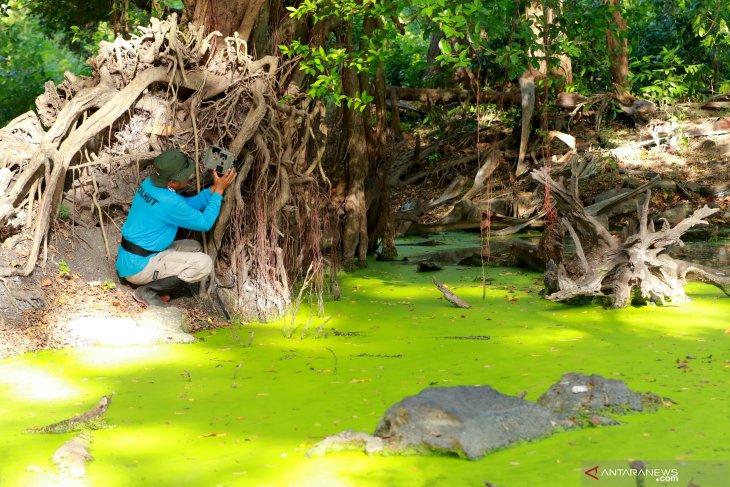 Pantau populasi banteng di TN Baluran