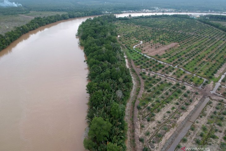LIPI develops MACADA application for mangrove ecosystem monitoring