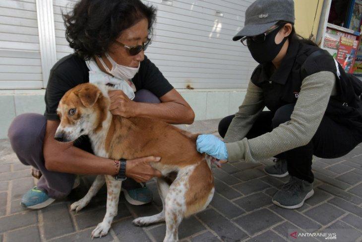 Sebanyak 2.200 hewan di Mukomuko diberikan vaksin rabies