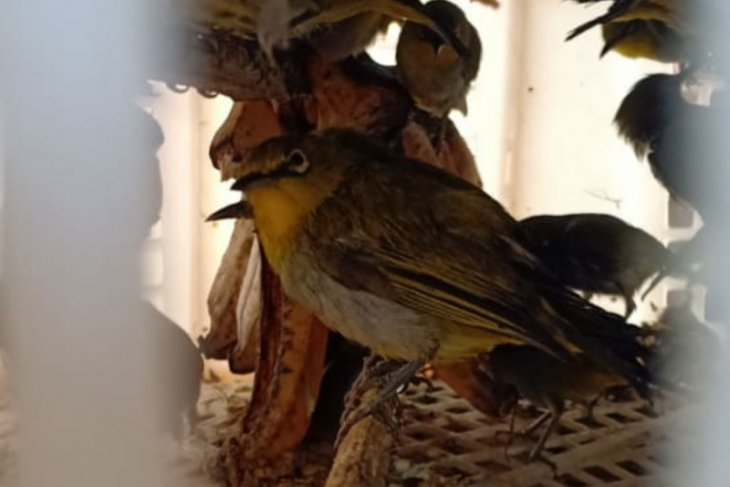 Penyelundupan 84 ekor burung liar digagalkan Karantina Pertanian Lampung