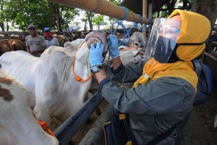 Pemeriksaan kesehatan hewan