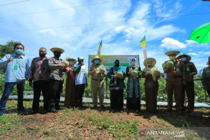 Wali Kota ingin Banjarbaru jadi sentra buah Melon berkualitas