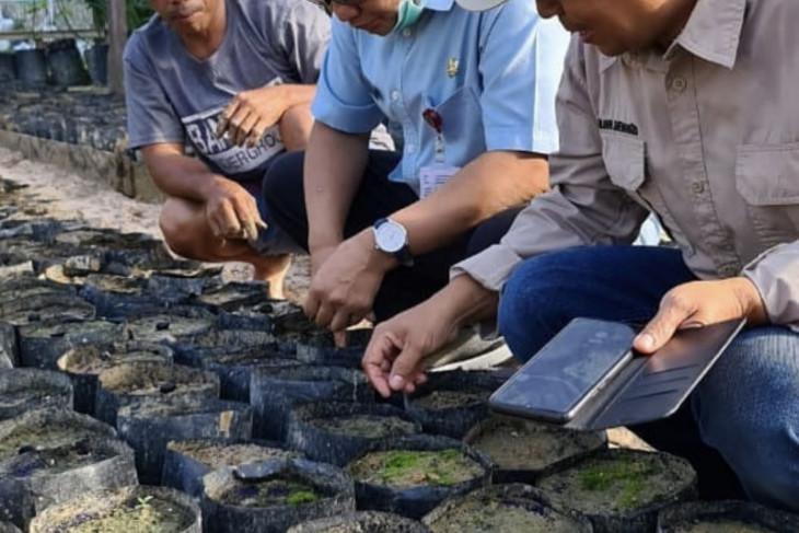 Disbun Kaltim targetkan retribusi sektor perkebunan sebesar Rp1,97 miliar