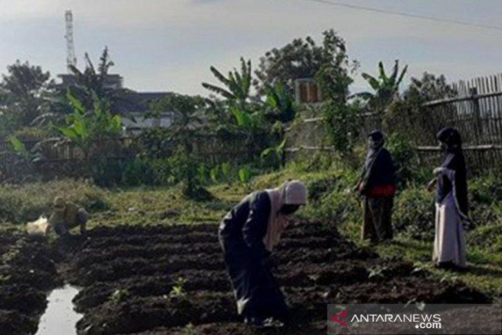 Pemkot Bogor kembangkan