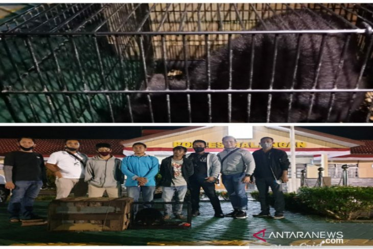 S Kalimantan Police uncover two cases of protected animal trade