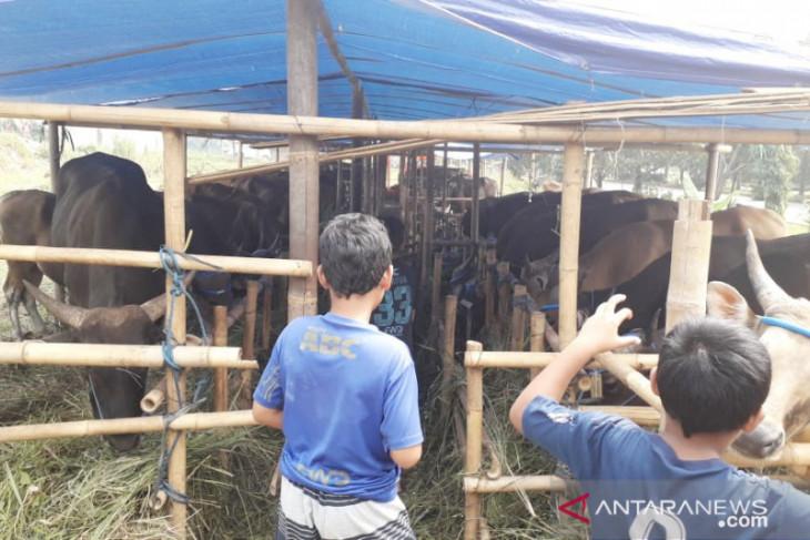 Jumlah hewan kurban di Kabupaten Bogor menurun saat pandemi