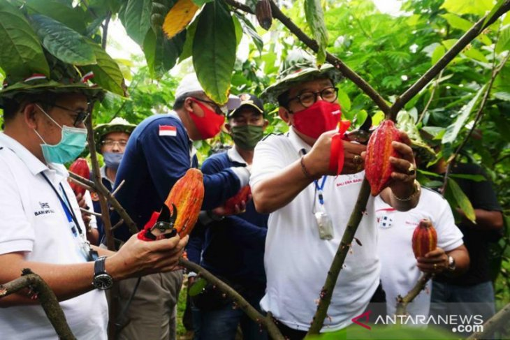 BI Bali dorong kakao Jembrana jadi primadona ekspor