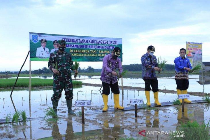 Bupati HSS : Ditengah pandemi COVID-19, petani tetap wujudkan ketahanan pangan