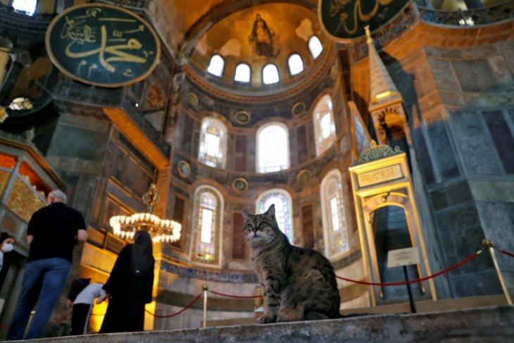 Gli si kucing tetap jadi penghuni Hagia Sophia yang kini menjadi mesjid