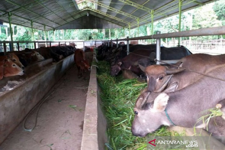 Persediaan hewan kurban di Aceh Besar sebanyak 2.333 ekor