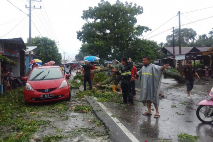 Pohon tumbang sebabkan jalan lintas Meulaboh-Blangpidie terganggu