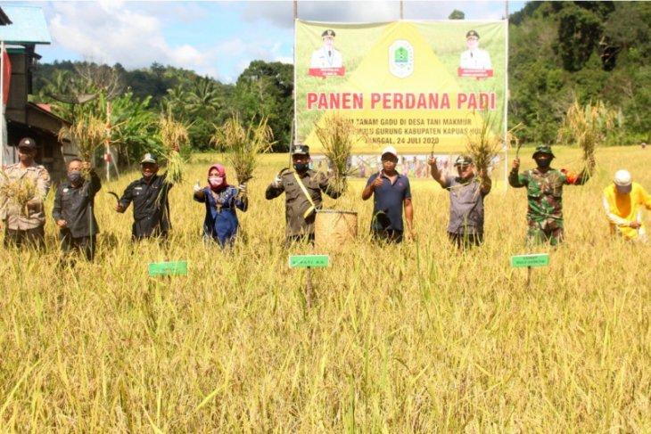 Bupati Kapuas Hulu panen perdana padi musim gadu