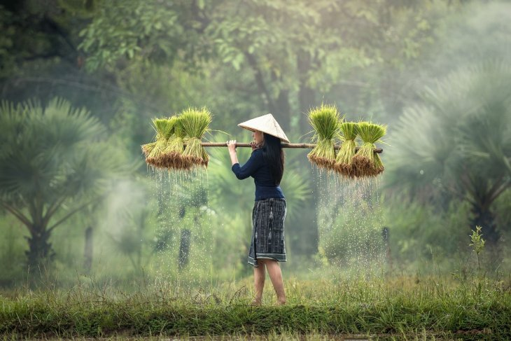 Family farms vital to food security, in need of support: FAO