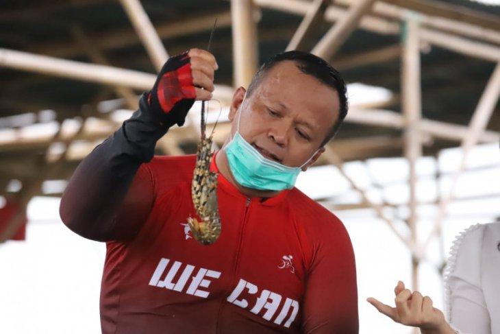 Menteri Edhy ingin tumbuhkan etos pembudidayaan lobster nasional