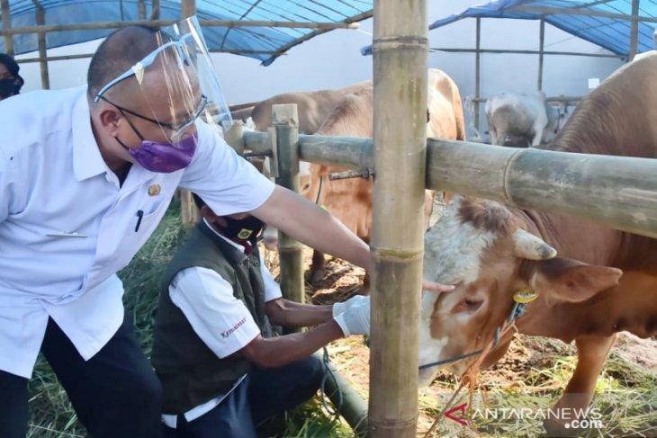 Kabupaten Bogor kerahkan 98 petugas periksa hewan kurban dilapak penjual