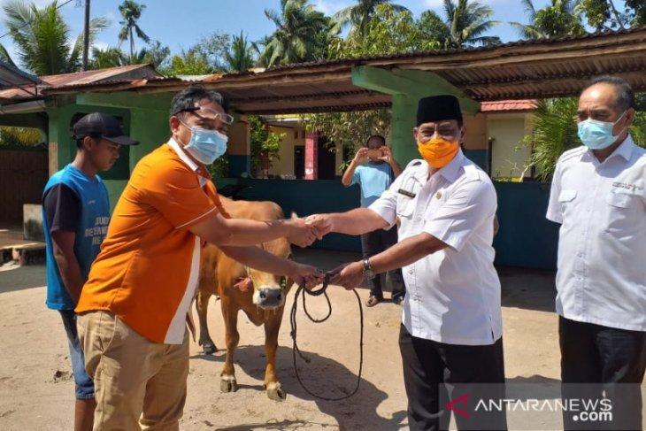 Pelindo II Tanjung Pandan salurkan 7 ekor sapi kurban untuk masyaraka