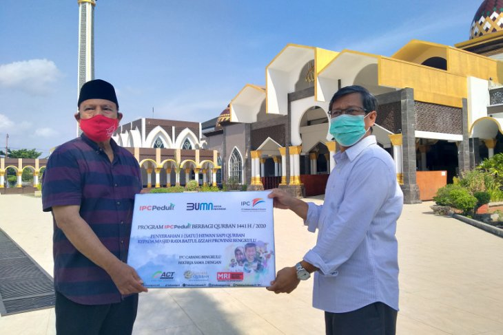Pelindo Bengkulu salurkan sapi kurban ke lima masjid