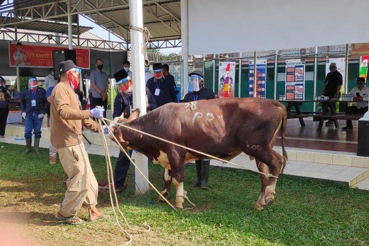 Menteri Yasonna kirim lima sapi ke lapas dan rutan