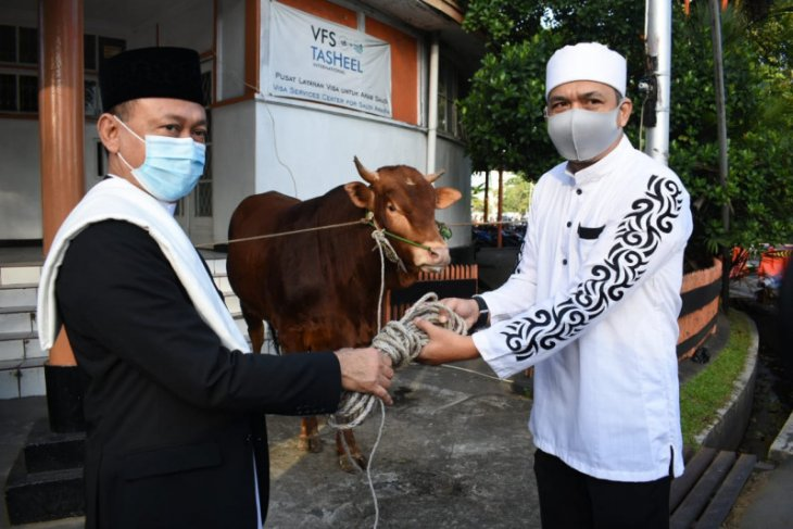 Pemkot Pontianak salurkan 30 sapi kurban