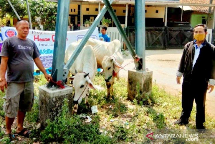 Indocement kurban 29 sapi dan tiga kambing untuk desa mitra di Bogor