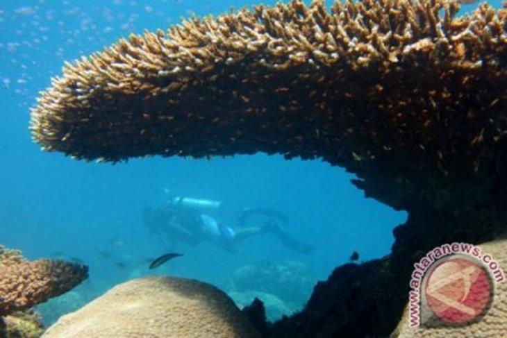 Edhy Prabowo: Pelestarian karang selaras pertumbuhan ekonomi pesisir