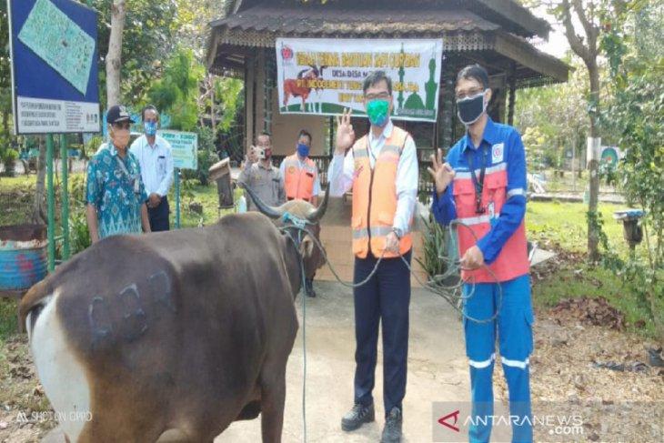 Indocement Tarjun allots 28 sacrifice cows