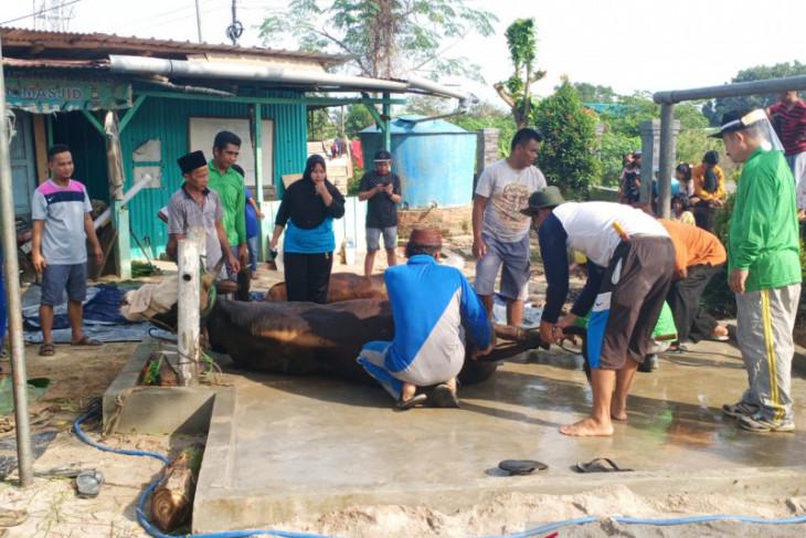 Warga Gabek sampaikan terimakasih atas bantuan sapi dari Pemkot Pangkalpinang