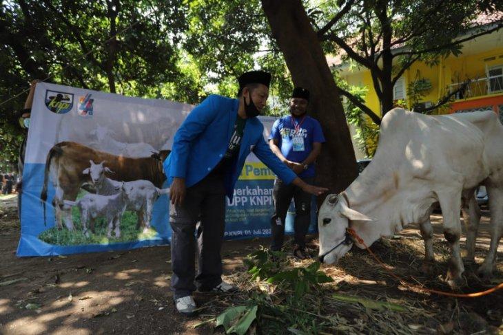 DPP KNPI: Idul Adha momentum bagi pemuda buktikan kepekaan sosial