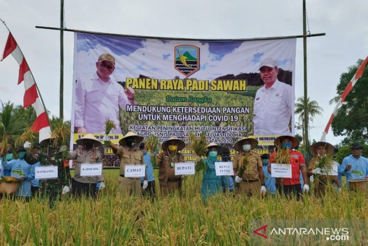 Rice harvest in Kotabaru village increases from 2,4 ton to 7,3 ton