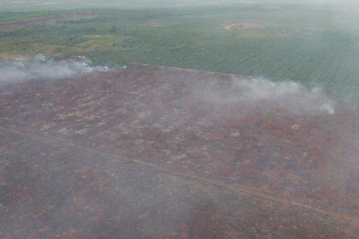 KLHK: Kasus kebakaran hutan dan lahan PT IGP segera ke pengadilan