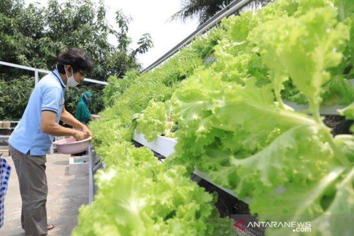 Berkebun di atap rumah bisa untung jutaan
