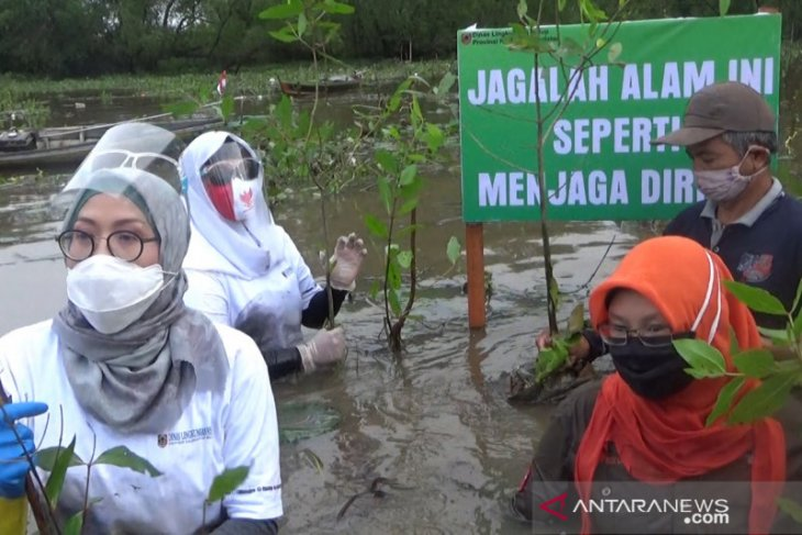 S Kalimantan Environment Agency plants mangrove to save flora and fauna