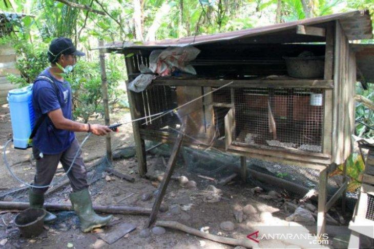 Aceh Barat disinfektan kandang ayam warga cegah wabah tetelo