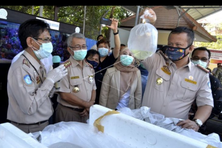 Menteri KKP tinjau TPFI Ngurah Rai