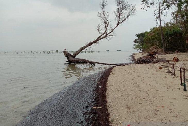 Walhi desak pengambil kebijakan tangani limbah minyak di Pulau Pari. Kepulauan Seribu