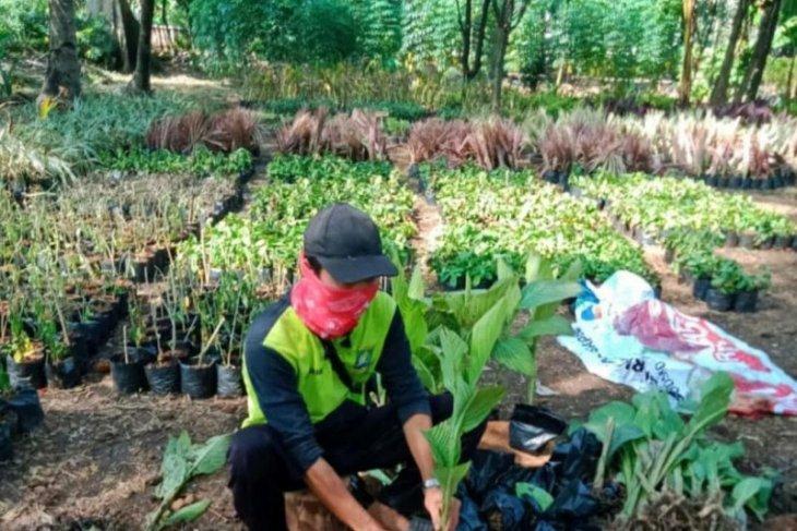 Disbudpar Tangerang hemat Rp350 juta proses pembibitan secara mandiri